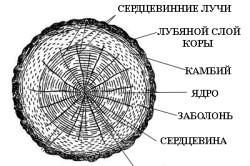Строение оцилиндрованного бревна