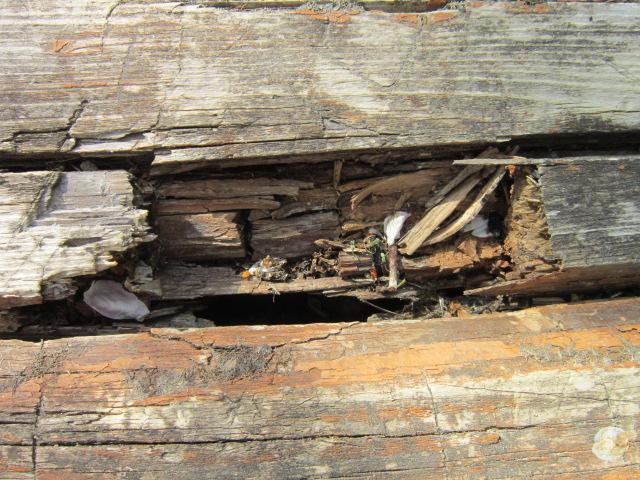 Борььа с гниением древесины