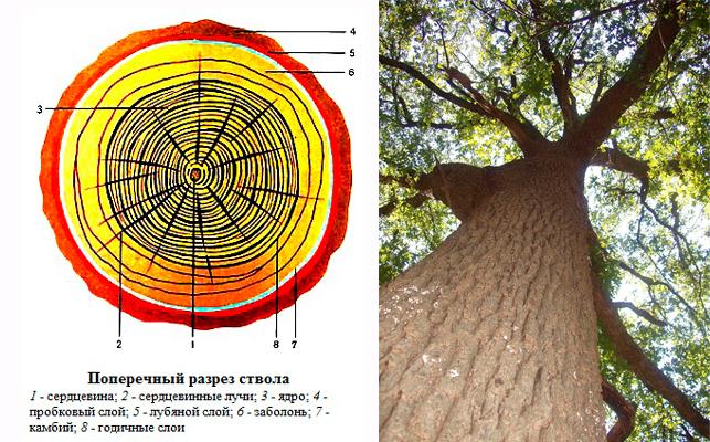Полный критерий оценки разреза древесины