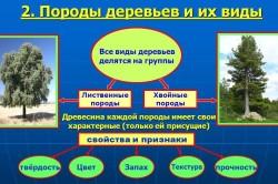 Классификация пород древесины.