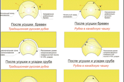 Влияние процесса усушки бревен на поведение чаши сруба