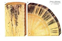Степень синевы древесины
